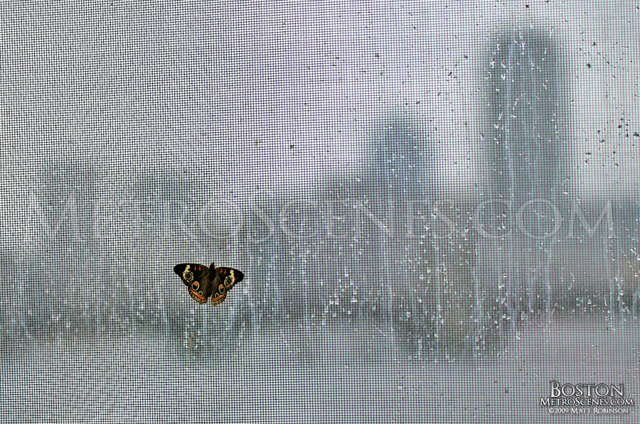 Butterfly on a rainy window