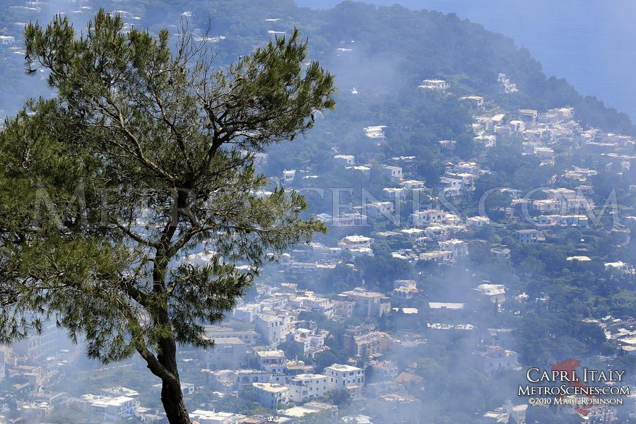 Mountaintop Tree in Capri