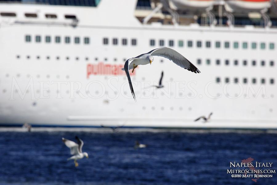 Seagull and Cruise ship