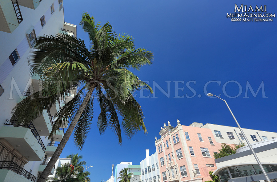 Miami scene with Palm tree