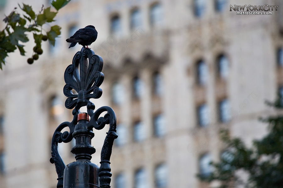 A bird rests on a decorative iron top.