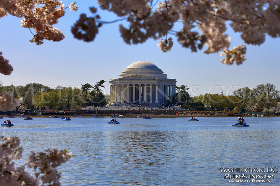 Cherry Blossoms frame the Jefferson Memorial