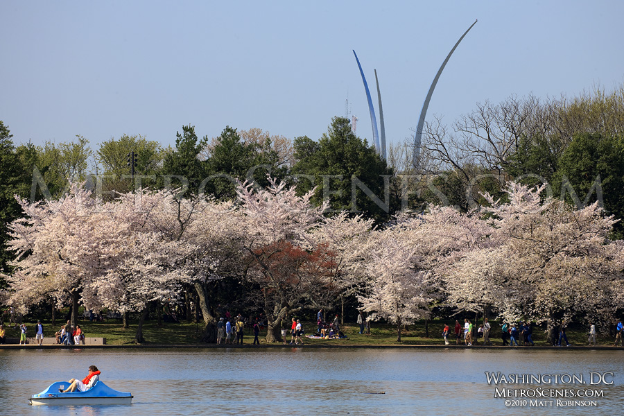 Cherry Blossoms with the Air Force Memorial