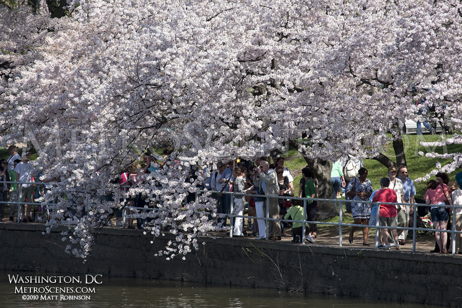Visitors enjoy the Cherry Blossom Festival along the Tidal Basin