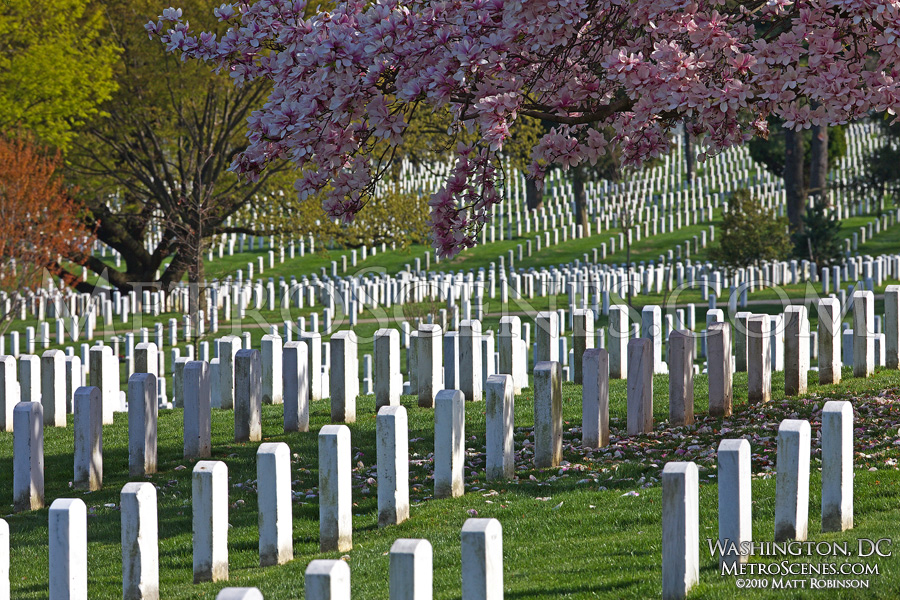 Springtime at Arlington National Cemetery