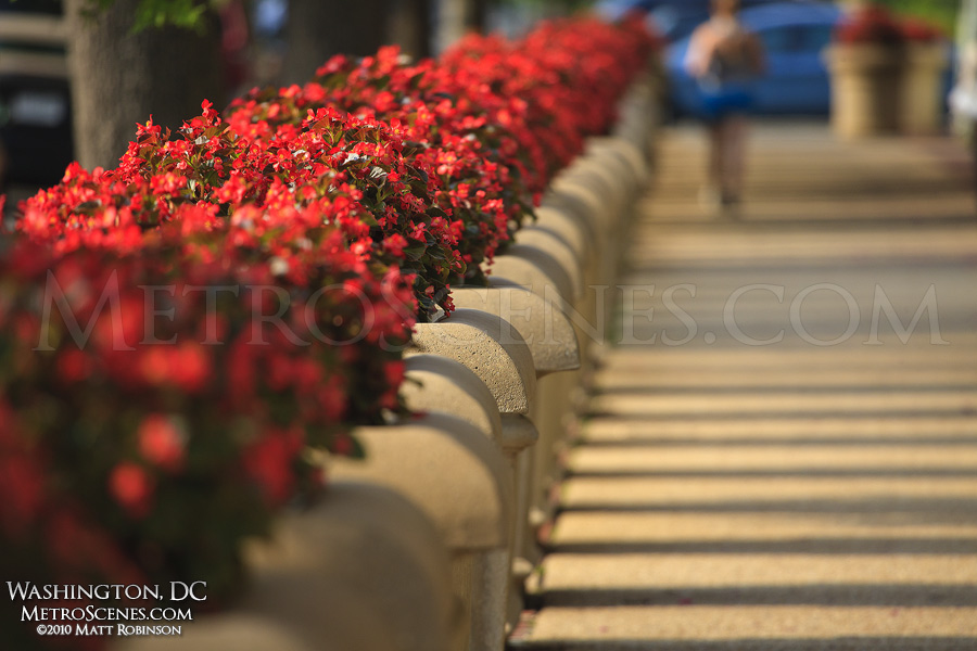 Row of Planters, Washington, DC