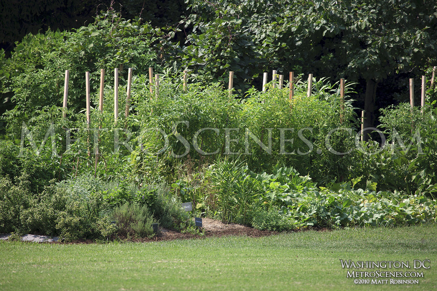 The White House vegetable garden